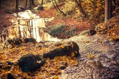 Dalingsgebladerte Autumn Forest stock foto's