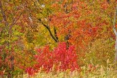 Dalingsgebladerte, Autumn Leaves New England Stock Afbeelding