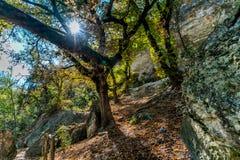 Dalingsgebladerte bij het Verloren Park van de Esdoornsstaat in Texas royalty-vrije stock foto