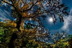 Dalingsgebladerte bij het Verloren Park van de Esdoornsstaat in Texas stock afbeeldingen