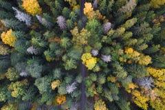 Dalingsgebladerte van boreaal bos in noords royalty-vrije stock afbeeldingen