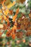 Dalingskleuren Stock Afbeelding