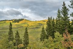 Dalingskleuren bij Kenosha-Pas in Colorado stock fotografie