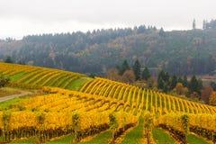 Dalingskleuren bij Wijngaard in Dundee Oregon stock foto