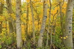 Dalingskleuren in de Siërra Bergen Californië Stock Foto's