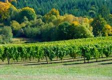Dalingskleuren in de Wijngaard Royalty-vrije Stock Afbeelding