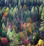 Dalingskleuren in het Land Stock Foto