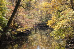 Dalingskleuren in het Park gelijkstroom van de Rotskreek Royalty-vrije Stock Foto's