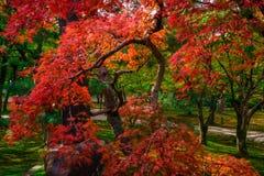 Dalingskleuren in Japan Stock Foto