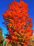 Dalingskleuren in Lake Placid, New York Royalty-vrije Stock Afbeelding