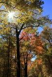 Dalingskleuren langs Blauw Ridge Parkway royalty-vrije stock afbeeldingen