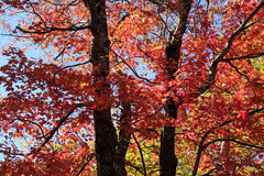 Dalingskleuren langs Blauw Ridge Parkway royalty-vrije stock fotografie