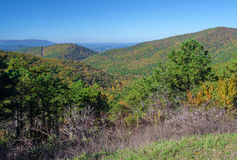 Dalingskleuren in Nationaal Park -3 van Shenandoah Stock Fotografie