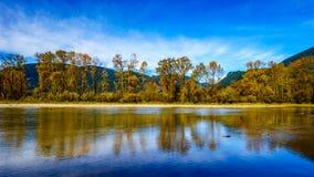 Dalingskleuren rond Nicomen Slough, een tak van Fraser River, aangezien het door Fraser Valley vloeit royalty-vrije stock foto's