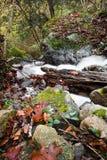 Dalingslandschap in bos met zijdeachtige satijn zachte rivier die in lange blootstelling stromen Royalty-vrije Stock Afbeeldingen