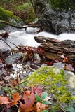 Dalingslandschap in bos met zijdeachtige satijn zachte rivier die in lange blootstelling stromen Stock Afbeelding