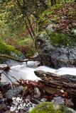 Dalingslandschap in bos met zijdeachtige satijn zachte rivier die in lange blootstelling stromen Royalty-vrije Stock Fotografie