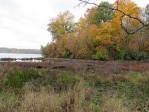 Dalingslandschap langs het water met bomen met gele bladeren stock afbeelding