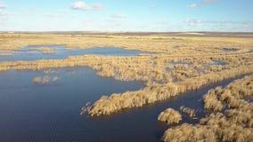 Dalingsmeer met riet stock footage