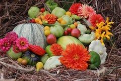 Dalingsoogst met heldere bloemen: tomaten, pompoenen, bonen Stock Afbeeldingen