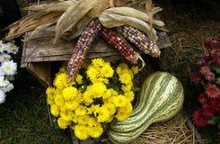 Dalingsscène met graan, mums en een pompoen stock afbeelding