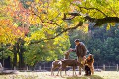 Dalingsseizoen met mooie esdoornkleur in Nara Park, Japan Royalty-vrije Stock Foto's