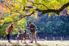 Dalingsseizoen met mooie esdoornkleur in Nara Park, Japan Stock Foto's