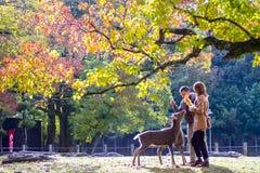 Dalingsseizoen met mooie esdoornkleur in Nara Park, Japan Royalty-vrije Stock Afbeeldingen