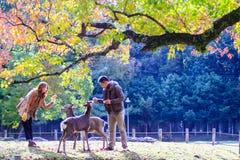 Dalingsseizoen met mooie esdoornkleur in Nara Park, Japan Stock Afbeeldingen