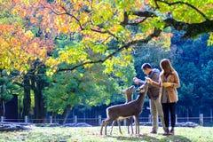 Dalingsseizoen met mooie esdoornkleur in Nara Park, Japan Royalty-vrije Stock Foto