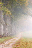 Dalingssteeg in mist, tijdens regenachtige dag Stock Foto