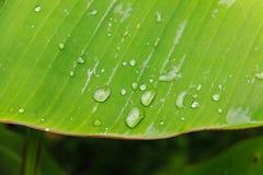 Dalingswater op banaanblad Stock Afbeelding