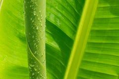 Dalingswater op banaanblad Royalty-vrije Stock Afbeelding
