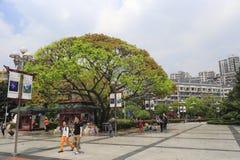 Dalitang, chongqing city Royalty Free Stock Photo