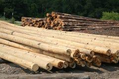 Dall'albero al palo pratico Fotografia Stock