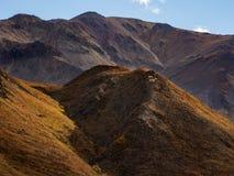 Dall får på berget Ridge, Autumn Landscape, Denali nationalpark royaltyfri bild