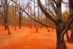 Dalla foresta sola del theA di Kunming nell'inverno immagini stock libere da diritti