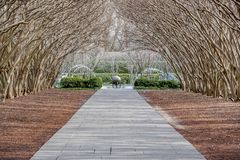 Dallas Arbitorium and Botanic Garden in Winter. Mrytle trees in winter guise frame a footpath royalty free stock photography