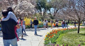 Dallas arboretum ogród zdjęcie royalty free