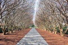 Dallas arboretum obrazy stock