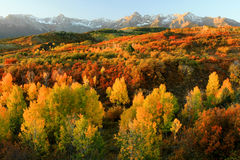 Dallas Divide. Horizontal view of the Dallas Divide in autumn showing the fall colors near Ouray, Colorado at sunrise Royalty Free Stock Photos