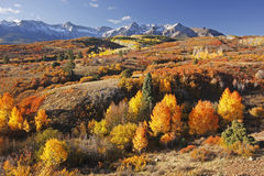 Dallas Divide, Uncompahgre National Forest, Colorado Stock Images