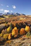 Dallas Divide Uncompahgre nationalskog, Colorado arkivbilder