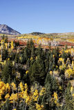 Dallas Divide Uncompahgre nationalskog, Colorado royaltyfri foto
