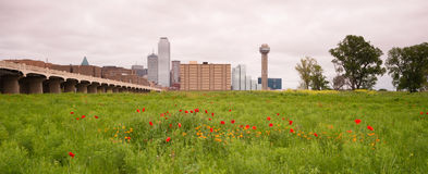 Dallas Texas City Skyline Metro Downtown Trinity River Wildflowe Stock Photos