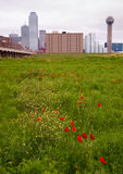 Dallas Texas City Skyline Metro Downtown Trinity River Wildflowers Stock Images