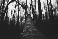 Dallen träd Arkivbild
