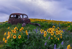 The Dalles Mountain Ranch, Wa Royalty Free Stock Photography