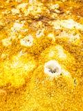 Dallol i den Danakil fördjupningen, Etiopien Royaltyfria Bilder