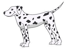 Dalmata Doggy Royalty Free Stock Images